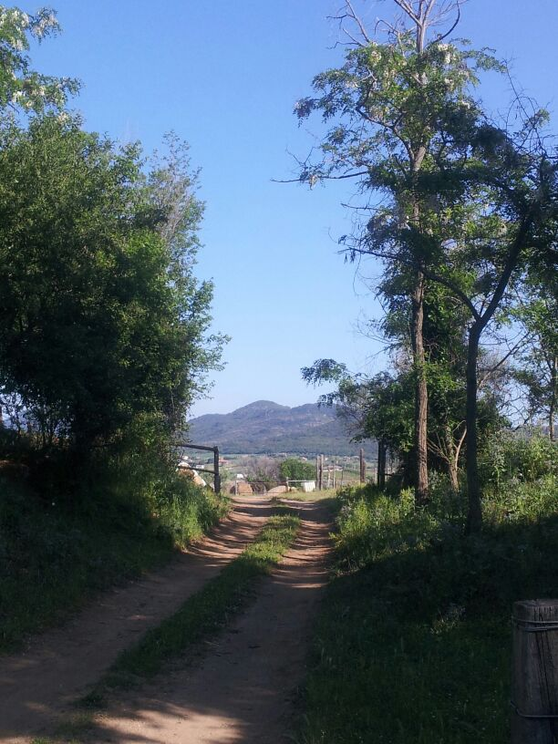hardlopen-Etrusken (1)