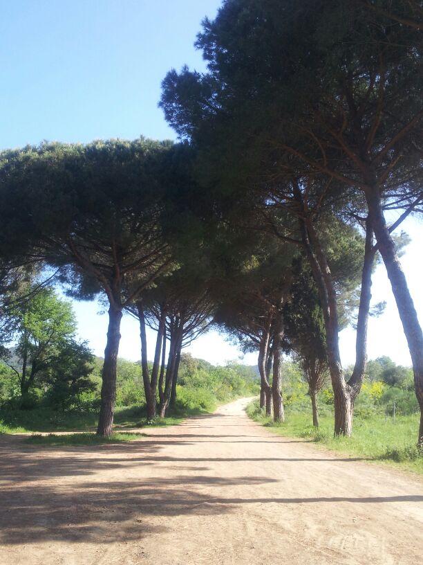 hardlopen-Etrusken (8)