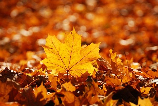 herfst-Italië