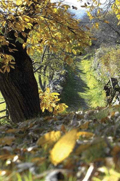 """In autumn, South Tyrol turns into a colourful landscape. It is harvest time. Thus it is also time for the traditional chestnut gatherings called """"Törggelen""""."""