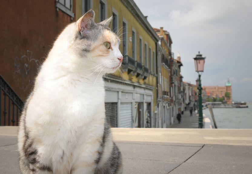 kat in Venetie
