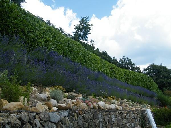 lavendel-tuin-Italië