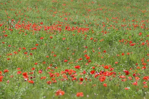 lente-Molise-Italië (2)