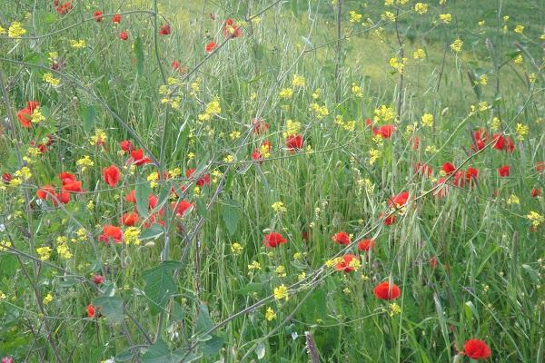 lente-Molise-Italië (4)