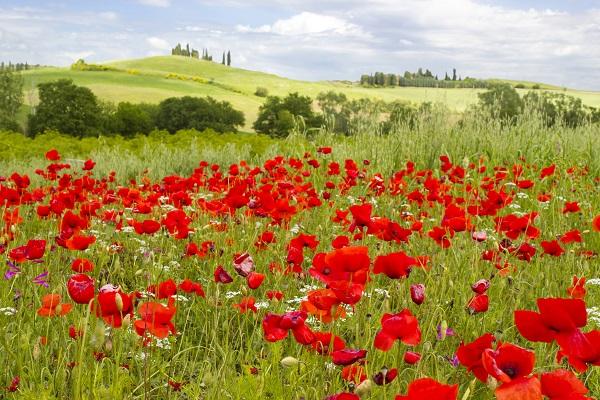 lente-Toscane