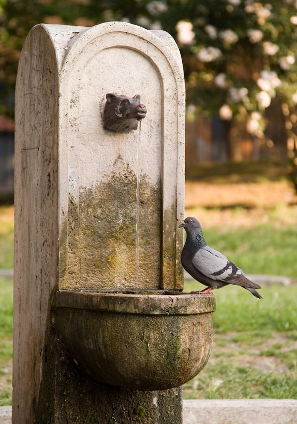 nasoni-fontein-water-drinken-Rome (1)