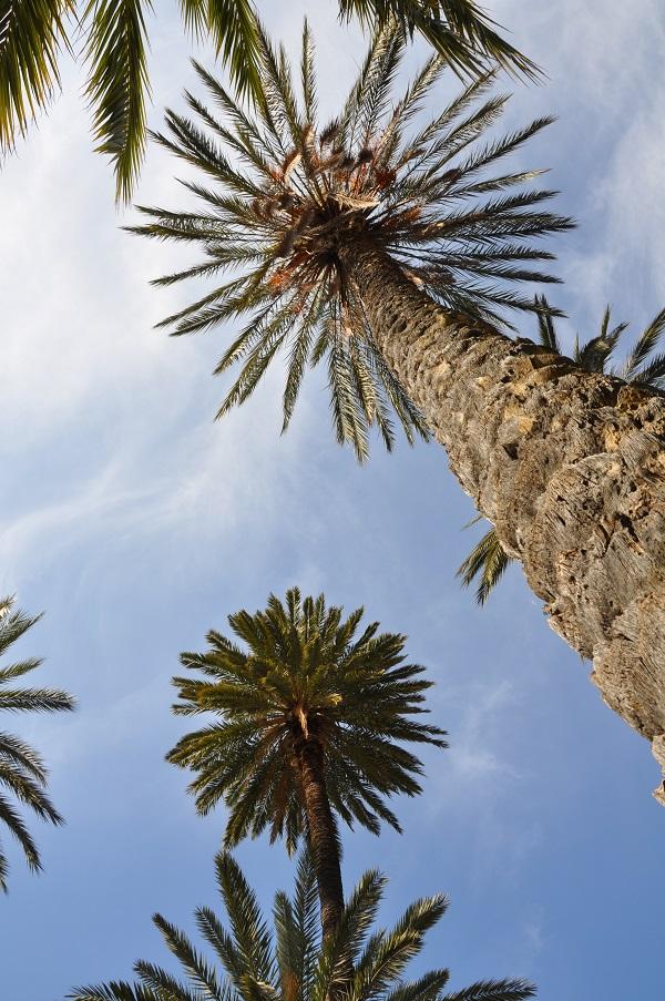 palmbomen-Palermo