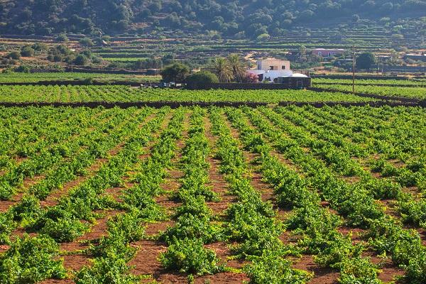 passito-Pantelleria (1)