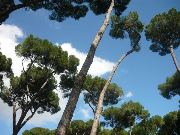 pijnbomen-Villa-Ada-Rome