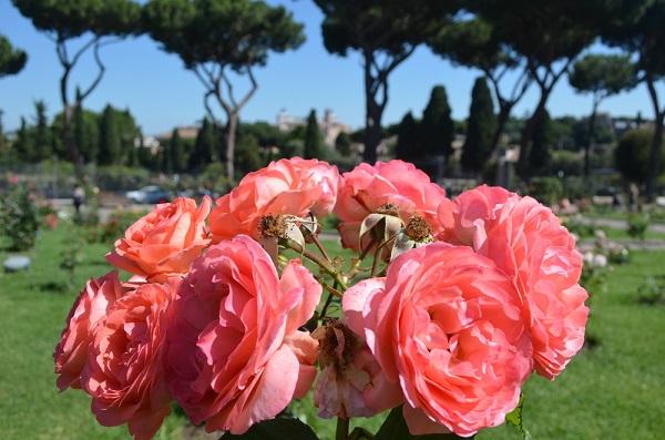 rozentuin-Roseto-Comunale-Aventijn-Rome (5)