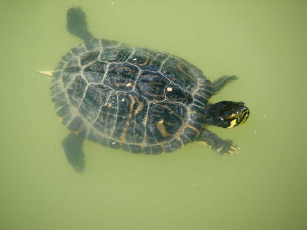 schildpadjes (2)