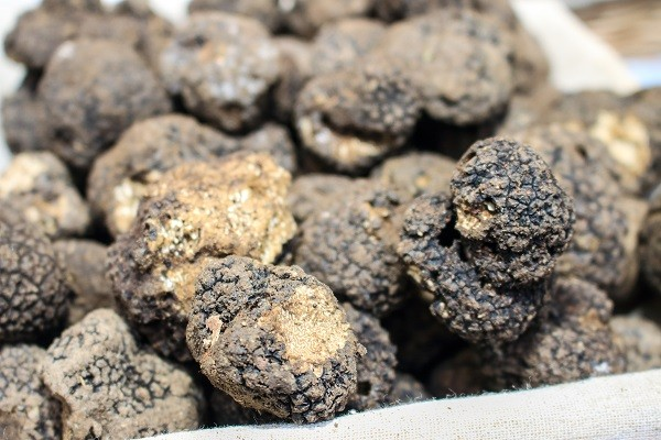 truffel-Umbrie