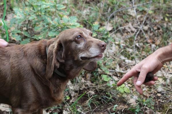 truffel-zoeken-Norcia-Umbrië (7)