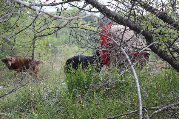 truffel-zoeken-Norcia-Umbrië (8)