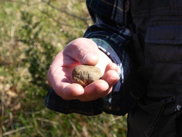 truffels-zoeken-San-Miniato-Toscane (11)
