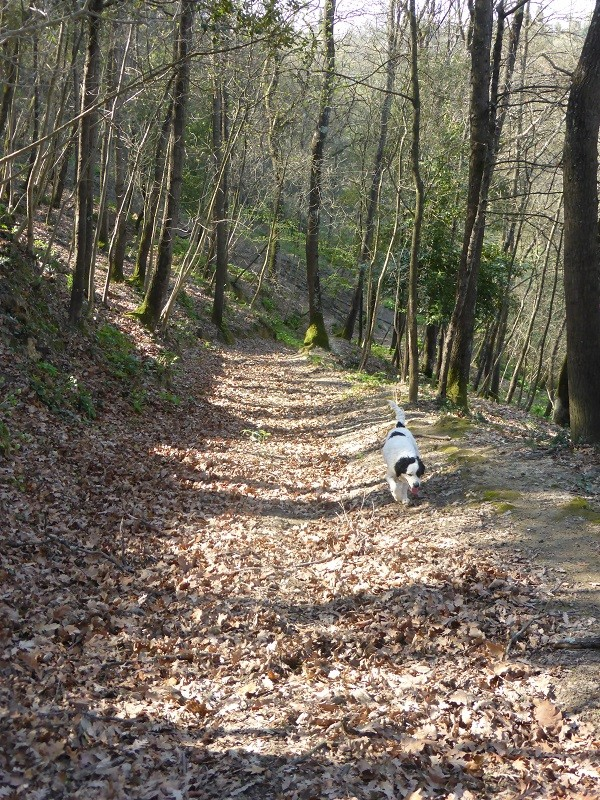 truffels-zoeken-San-Miniato-Toscane (1b)