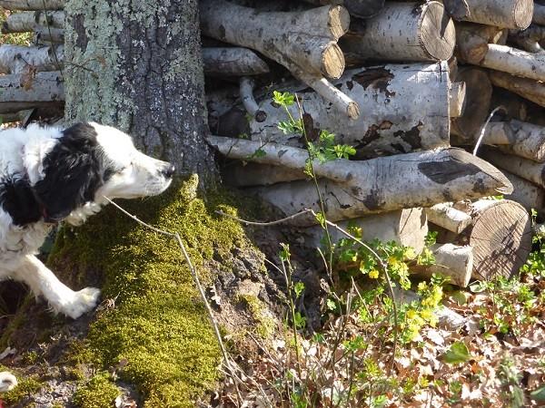 truffels-zoeken-San-Miniato-Toscane (2)