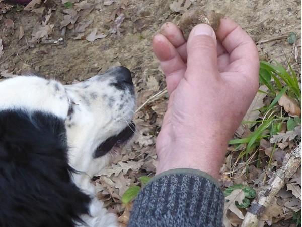 truffels-zoeken-San-Miniato-Toscane (22)