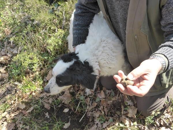 truffels-zoeken-San-Miniato-Toscane (8)