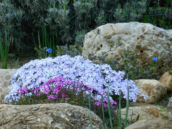 tuin-voorjaar-Italië (2)