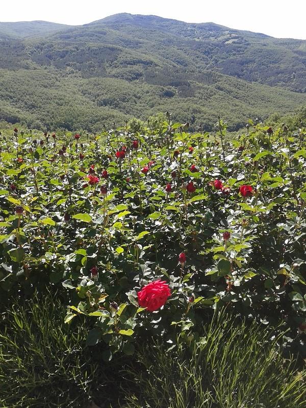 tuinen-Italië (1)