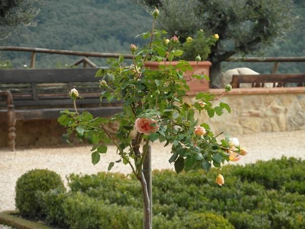 tuinen-Italië (10)