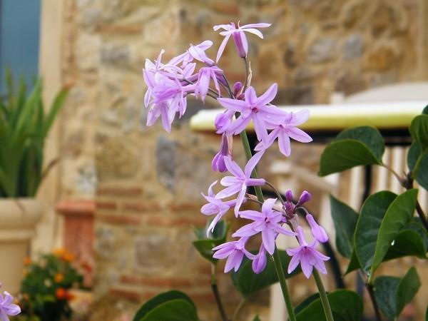 tuinen-Italië (2)