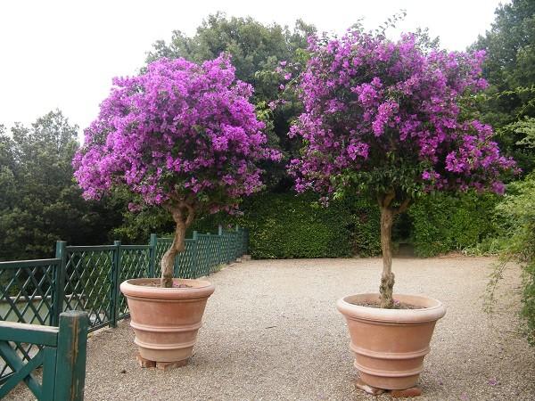 tuinen-Italië (5)