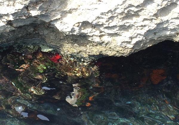 varen-Capri-boottocht-koraal