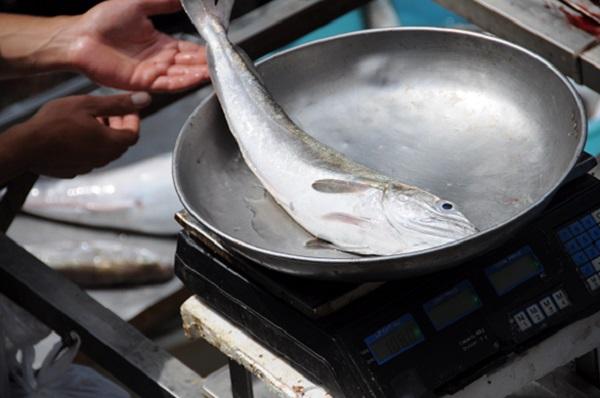 vis-markt-Catania-Sicilie-7