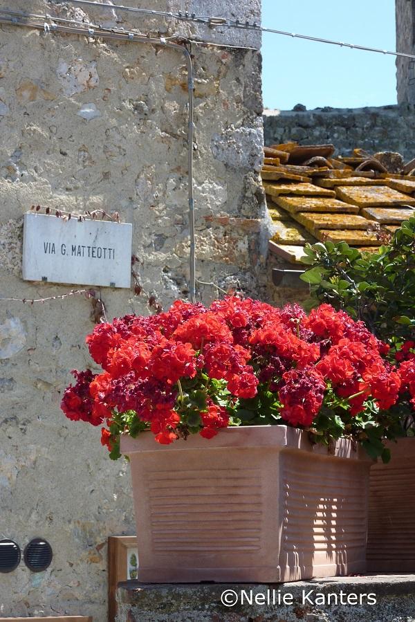 voorjaar-geraniums- Monteriggioni-Nellie-Kanters