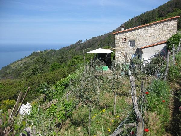 vruchtbare-hellingen-Cinque-Terre (1)