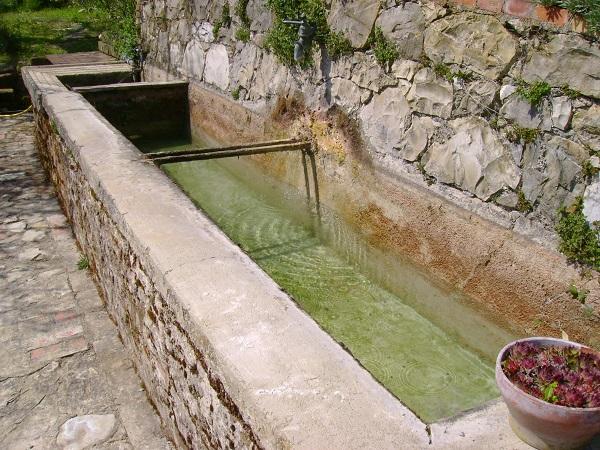 Water in de tuin en drie prachtige mediterrane planten u ciao