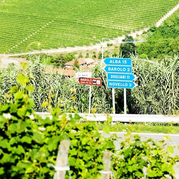 wijn-Piemonte (14)