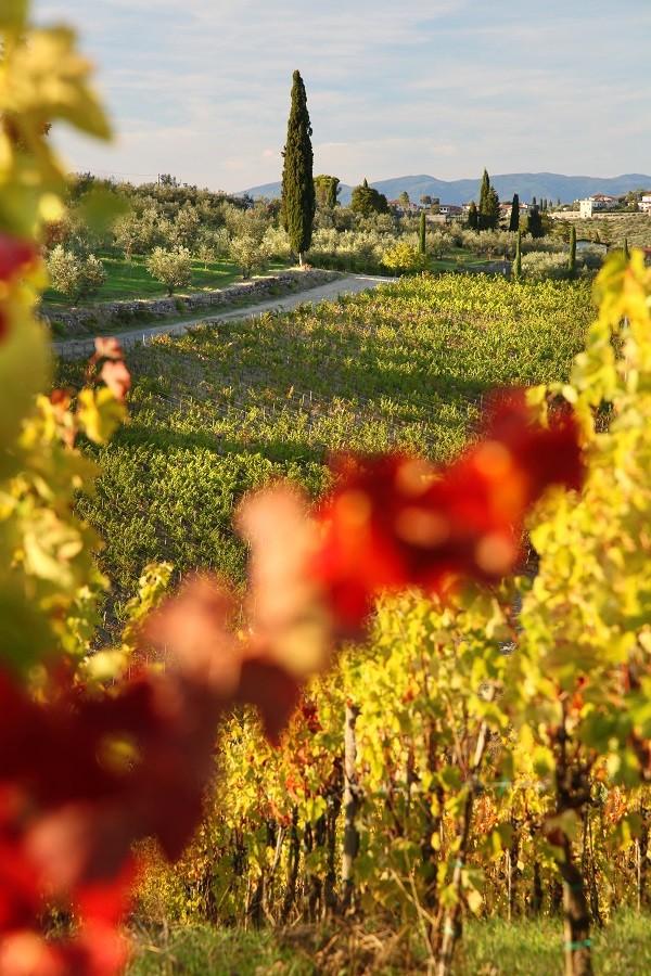 wijn-druiven-herfst-Toscane-wijngaarden-Italië (3)