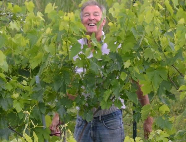 wijngaard-Umbrie (1)