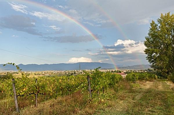 wijngaard-Umbrie