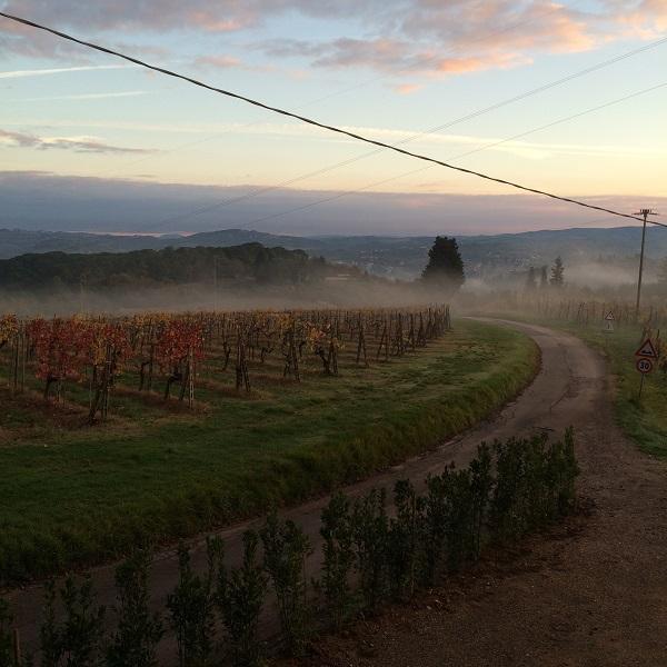 wijngaarden-Casa-al-Vento-Toscane (1)