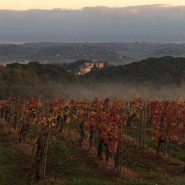 wijngaarden-Casa-al-Vento-Toscane (2)