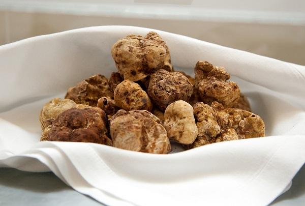 witte-truffel-tartufo-Alba-Piemonte (2)