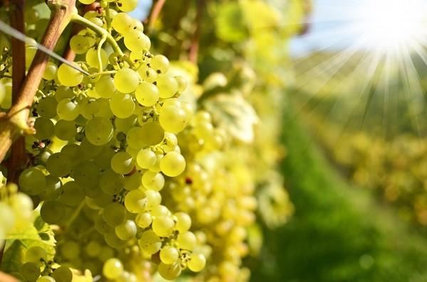 witte-wijn-Italië (1)