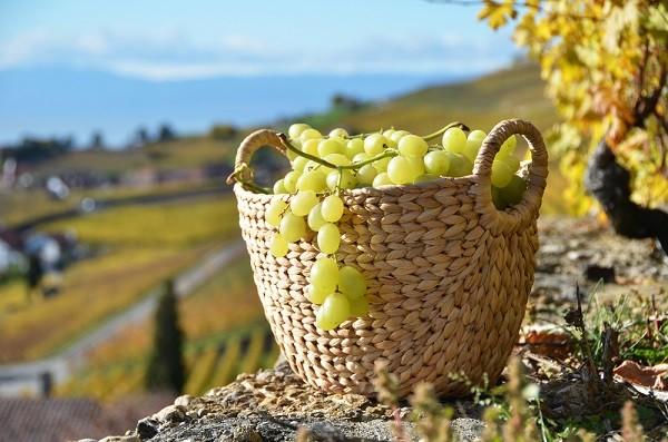 witte-wijn-Italië (3)